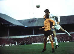 thfc-wolves-1